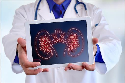 Your Kidneys Deserve Respect: 5 Reasons to Thank These Vital Organs!