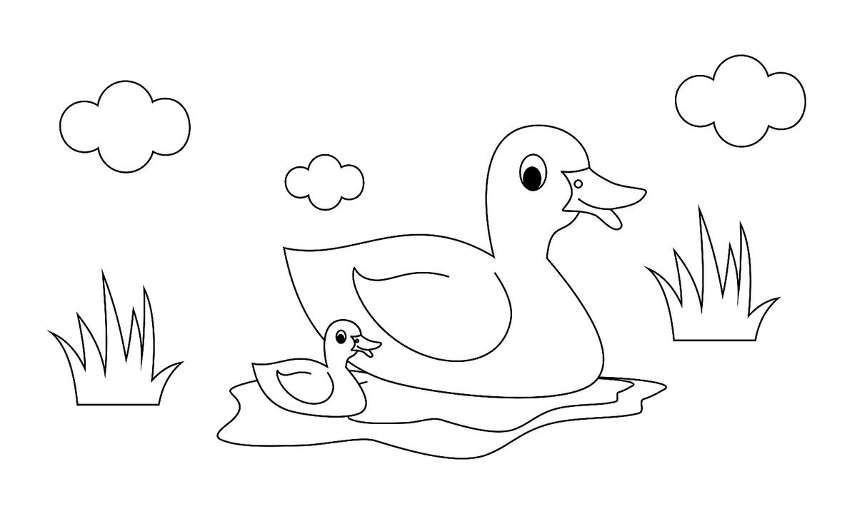 - Bird Coloring Pages For Kids: Fun Printable Coloring Pages Of Our