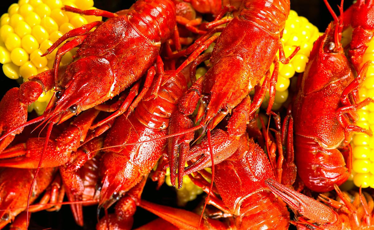 how to preserve live crawfish