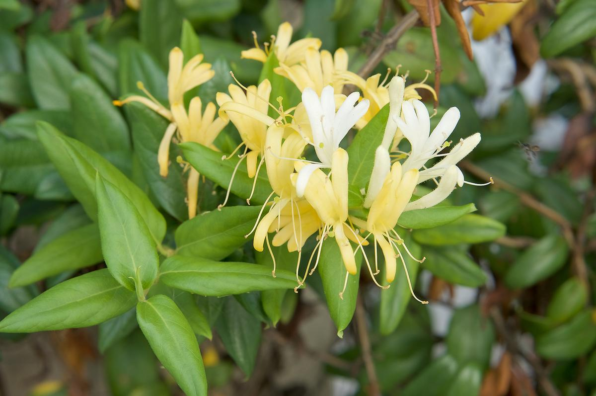 Gardening tips to help baby birds pollinators 7 plants you 39 ve gotta grow home 30seconds mom - Arbuste japonais fleur jaune ...