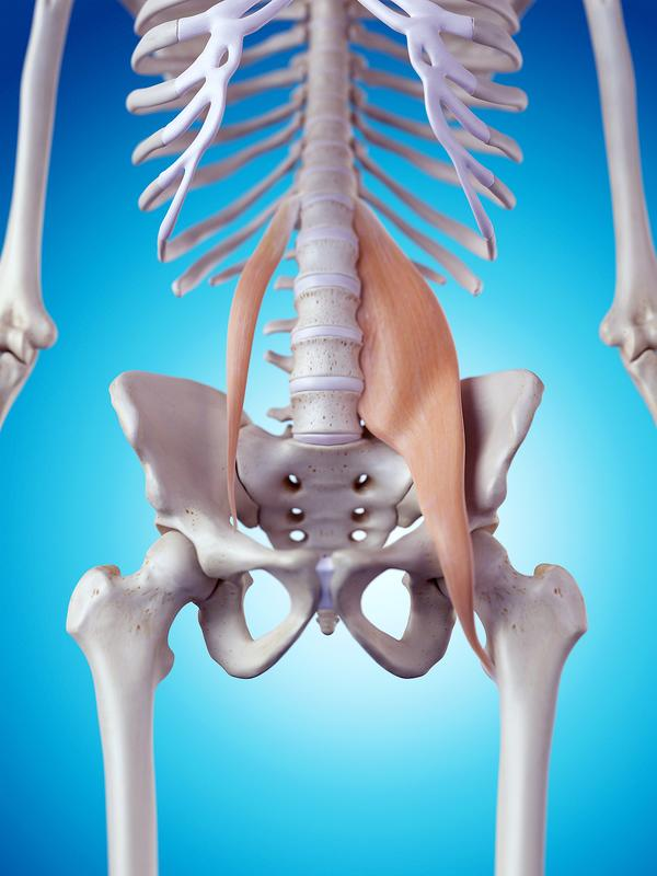 Psoas Muscle How It May Hold The Key To Releasing Pain Depression