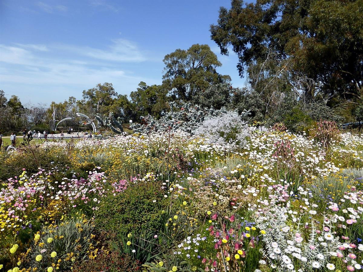 Kings Park in Perth: Flora, Fauna & Festivals in Western Australia