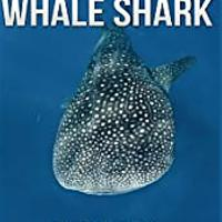 Books About Whale Sharks