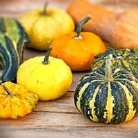 Decorative Fall Gourds