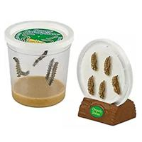 Grow a Butterfly Kits