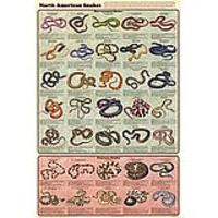 North American Snakes Deluxe Laminated Poster